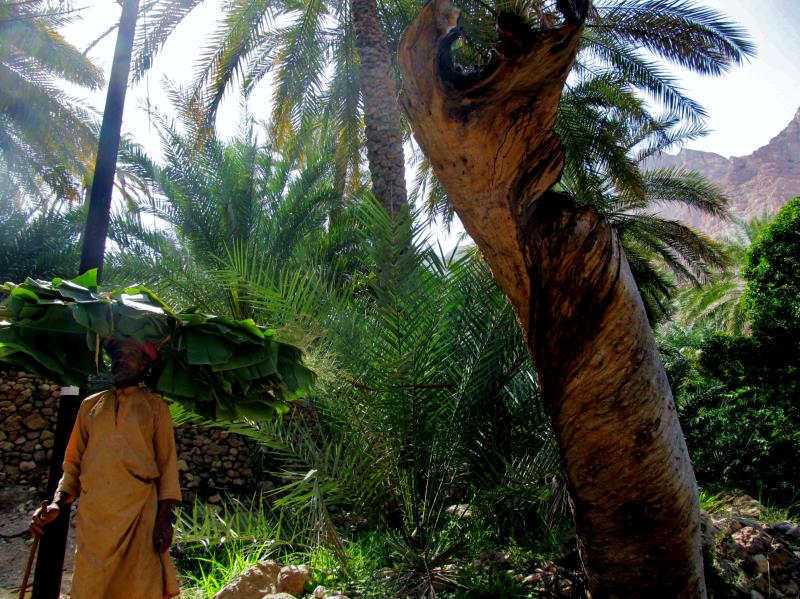 3 wadi tiwi